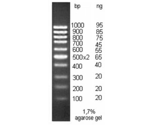 DNA molecular weight marker, M100bp