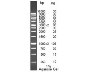 DNA molecular weight marker, M1Kb