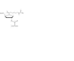 Amino-modified CPG